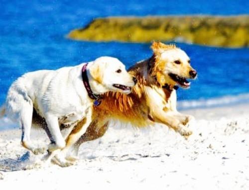 Primeira Praia para Cães em Portugal